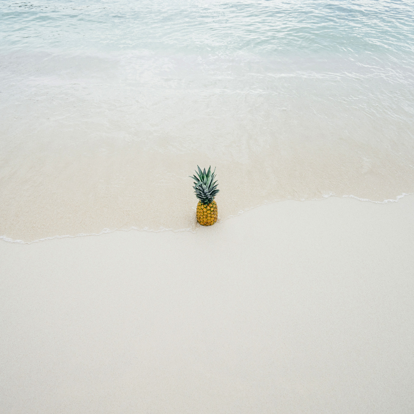 lonely pineapple searching for something